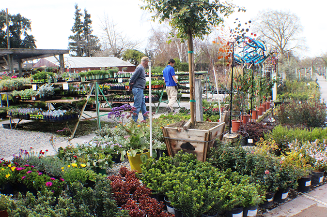 Local nursery colors your world